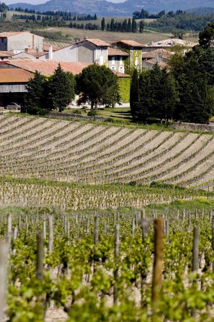 Vue sur le Château Guilhem depuis les vignes