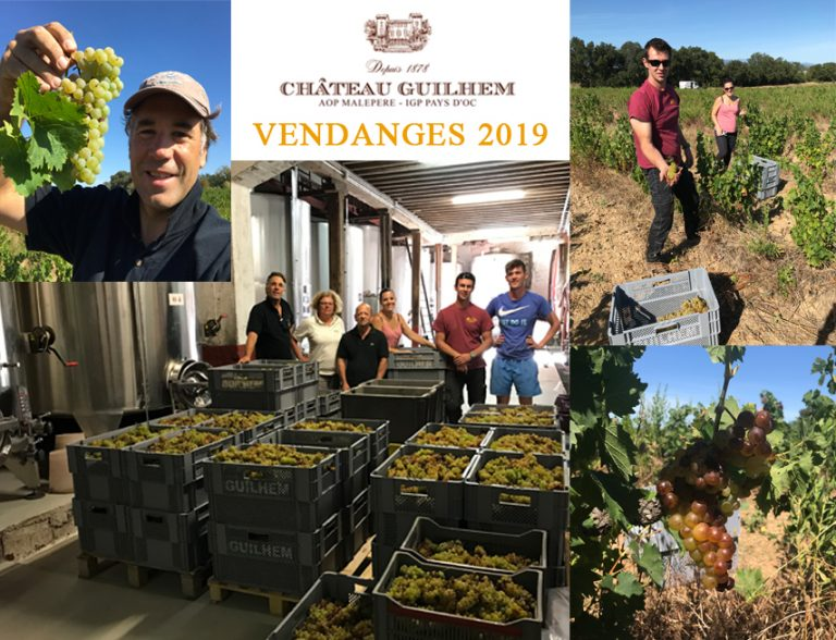 Montage photo vendanges 2019 - Château Guilhem