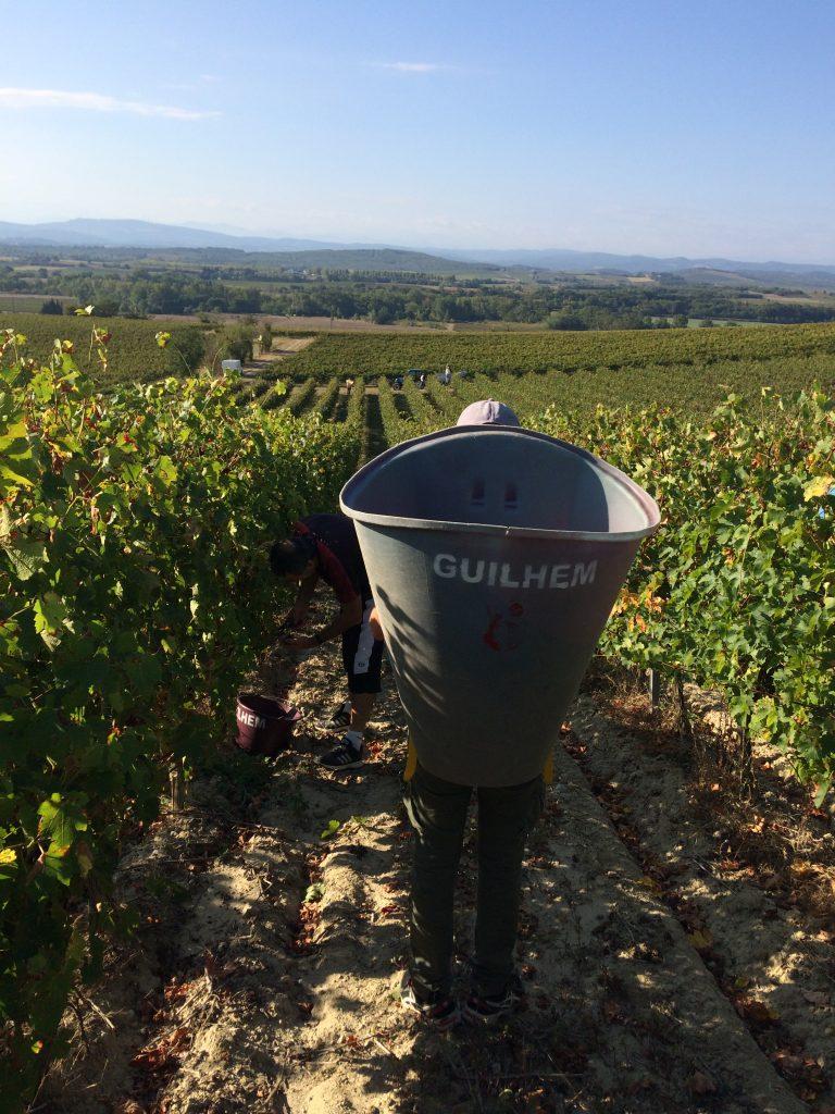 Travail des vignes Château Guilhem